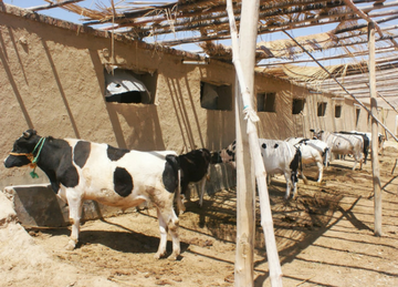 Women's Dairy Cooperative Project
