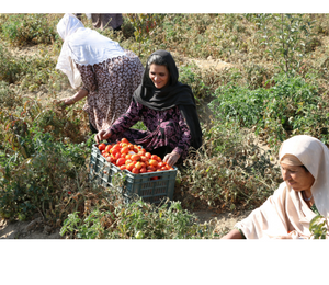 Women in Permaculture farm while getting training and harvesting farm produce
